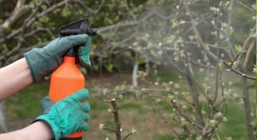 Растителна защита на овошките през август
