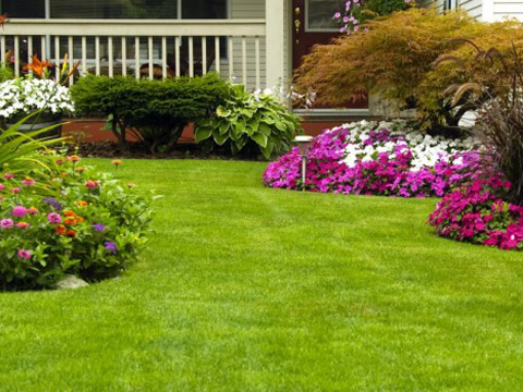 Засяване и грижи за тревата