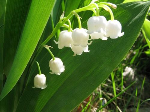Какви цветя да насадим в северен двор?