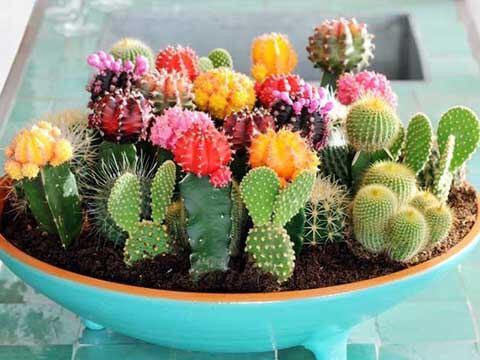 Подгответе кактусите за зимен сън