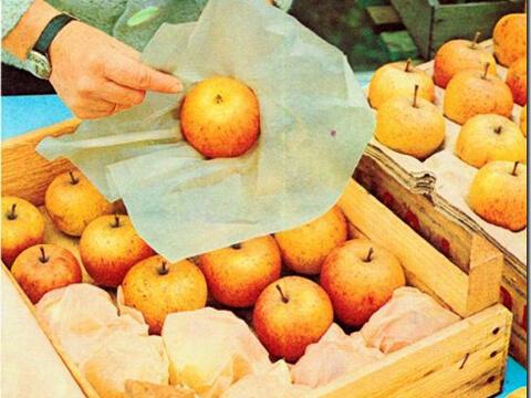 Обвитите с хартия ябълки се запазват по-добре