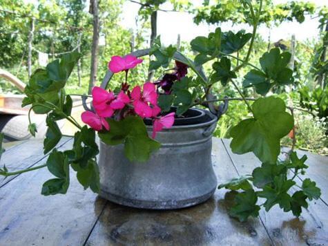 Мебели за растения