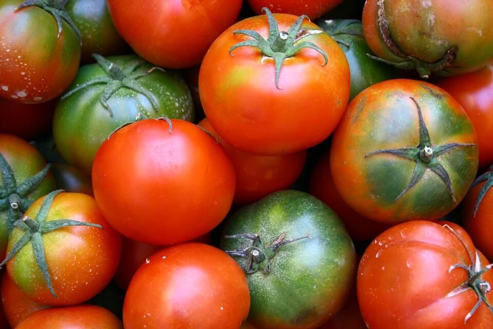 От какво боледуват доузряващите домати