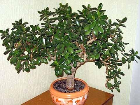 Дървото на живота се нуждае от хладна зима