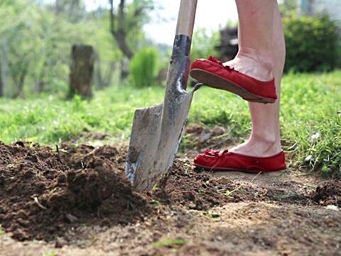 Направете предсеитбена обработка на почвата