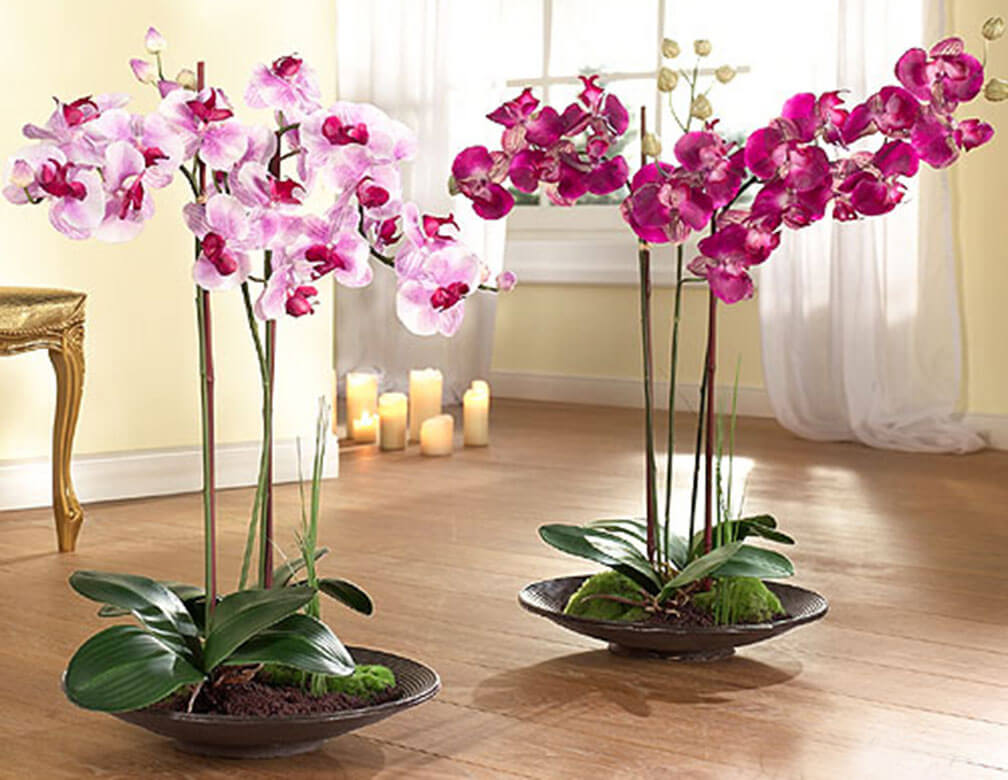 Грижи за цъфтящите орхидеи
