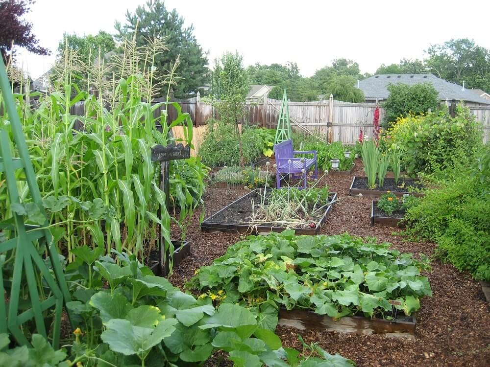 Зеленчукова градина не става между сгради и храсти