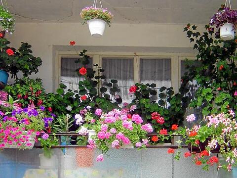 С какви цветя да украсим балкона?