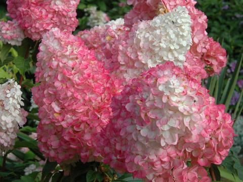 Изберете подходящи цветя за балкона