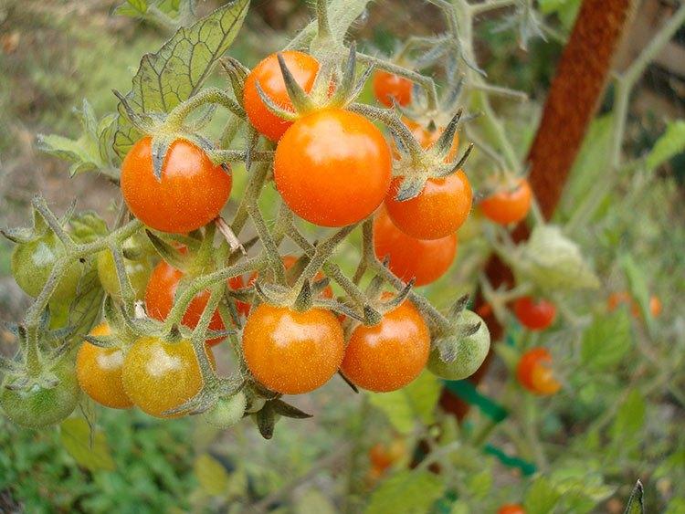 Предзимни грижи за градината