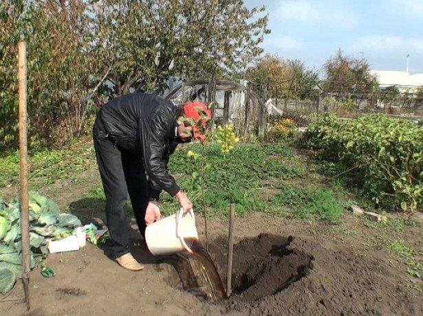 Време е да засадите новите фиданки