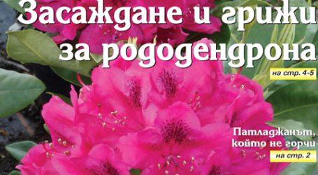 Вестник за градината, бр. 11