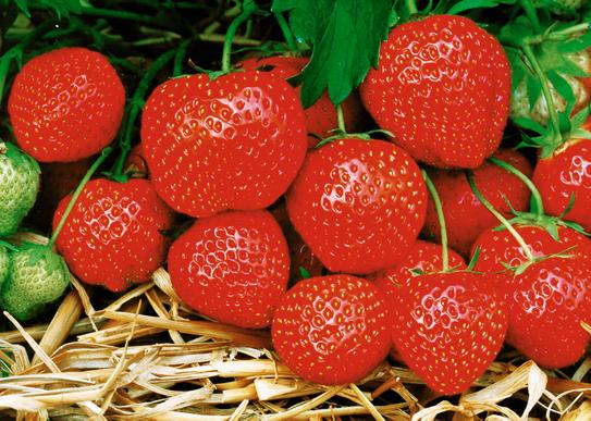 Напрашете ягодите с дървесна пепел