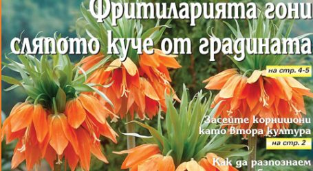 Вестник за градината, бр. 25