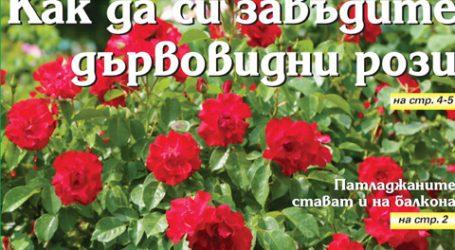 Вестник за градината, бр. 33
