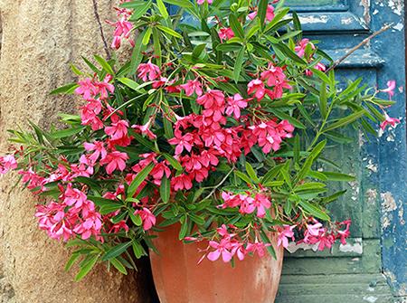 Приберете зиморничавите растения вкъщи