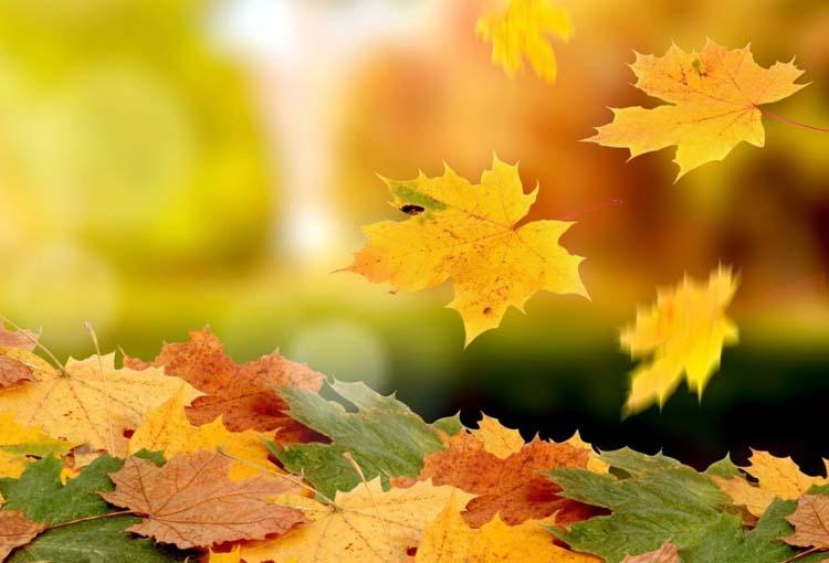 Как да постъпим с опадалите листа?