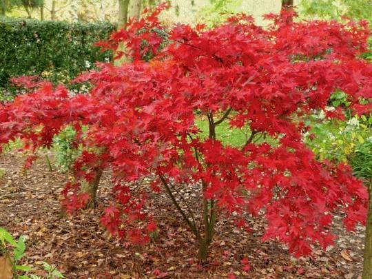 Есента е добро време за пресаждане на дървета и храсти