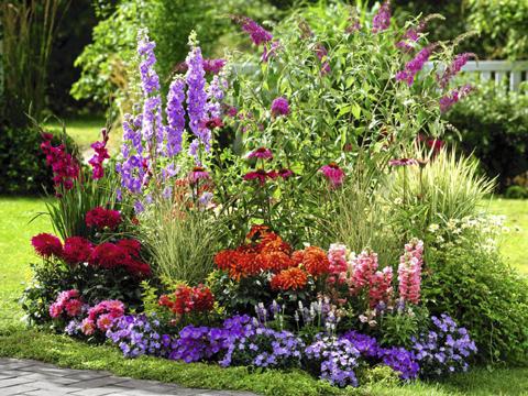 Градината ще цъфне и без разсад