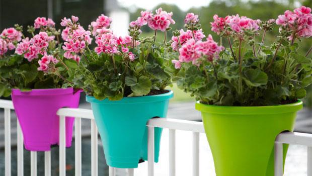 Какви цветя да сложим на северния балкон