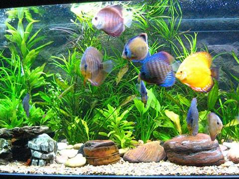 Как да изберем растения за аквариума