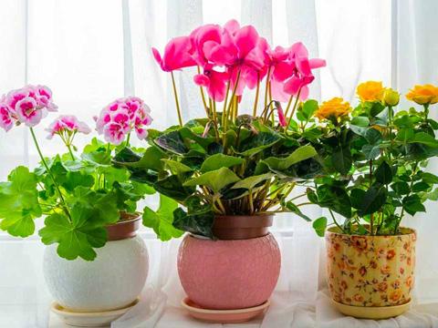 Мога ли да спася засъхналите растения?