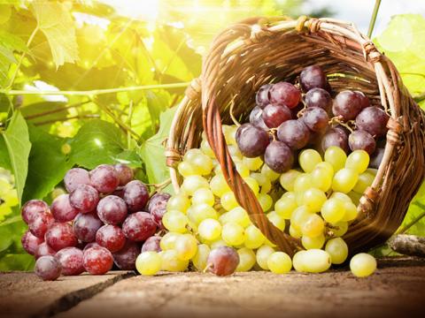 Искате ли да си имате прясно грозде за Коледа