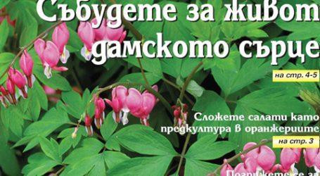 Вестник за градината, бр. 42