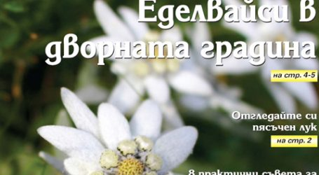 Вестник за градината, бр. 48
