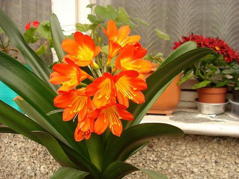 Цветята вкъщи