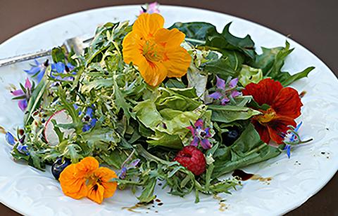 Ядливите цветя – сензация в готварството