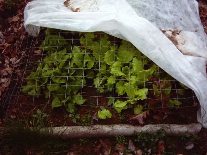 Направете топли гнезда за ранни зеленчуци