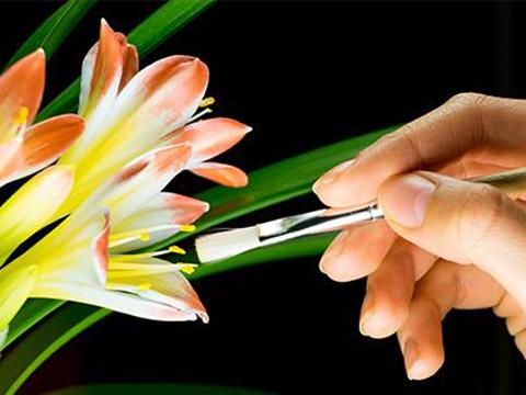 Станете селeкционери на цветя